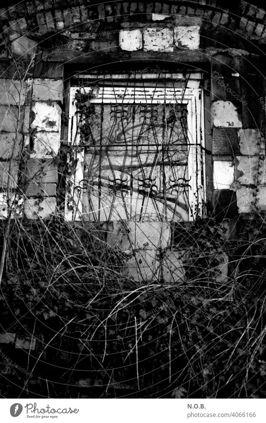 Barred window with bushes in black and white Black & white photo black-and-white Window barred windows Exterior shot Facade Deserted Building undergrowth