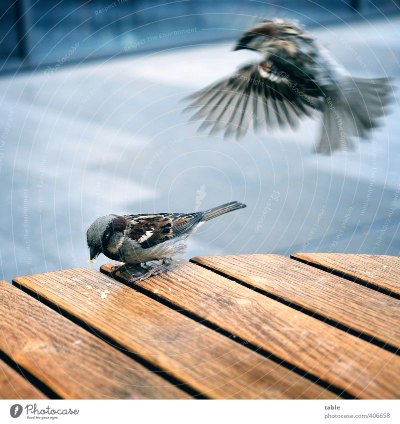 you can't even drink coffee in peace... ;) Eating Gastronomy Animal Wild animal Bird Wing Claw Sparrow 2 Pair of animals Wood Line Movement Flying To feed