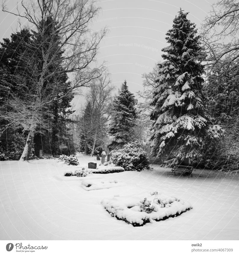 Winter Sadness Graves Death Grief Tost Landscape Nature Peaceful chill Panorama (View) Beautiful weather Tree Ice Frost Cemetery To console gravestones Cold