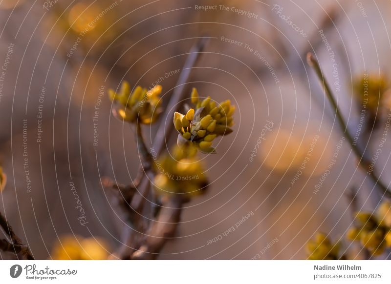Spring is coming Flower Nature Green Blossom Plant Blossoming Colour photo Exterior shot Macro (Extreme close-up) Close-up Detail Garden Shallow depth of field