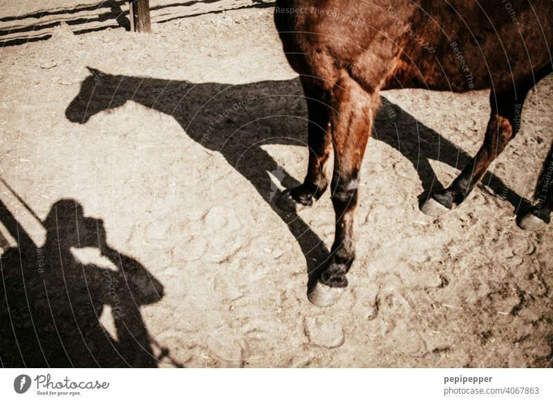 A man photographs his shadow and the shadow of a horse Shadow Light and shadow Contrast Structures and shapes Shadow play Dark side Shadowy existence