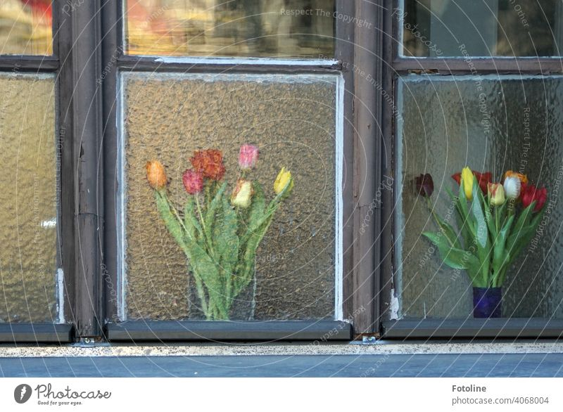 1900 Spring flowers in window Window window glass Window pane Window transom and mullion Wood Glass Vase Bouquet Tulip Tulip blossom tulips bouquet of tulips