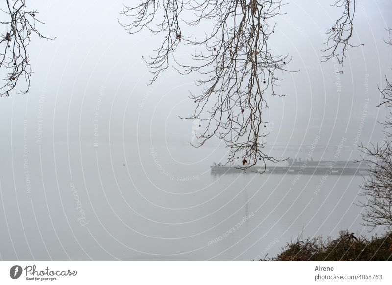 unpromising Fog Lake Lakeside Calm morning mood bank Loneliness foggy Morning fog early melancholy Mysterious cryptic Dreary twigs winter hazy waterfowls Lonely