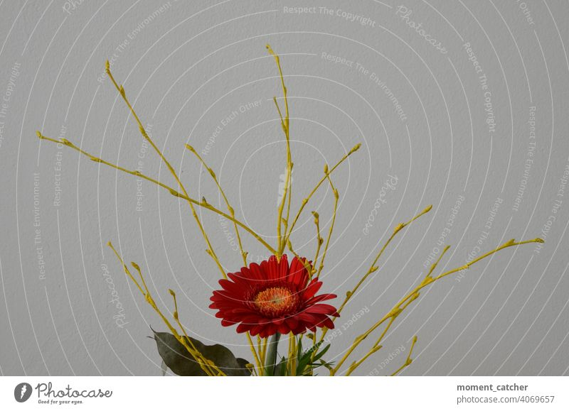 Red flower with yellow branches against white background Bouquet Flower twigs Yellow Spring Gerbera flower decoration flower arrangement Gift floral gift