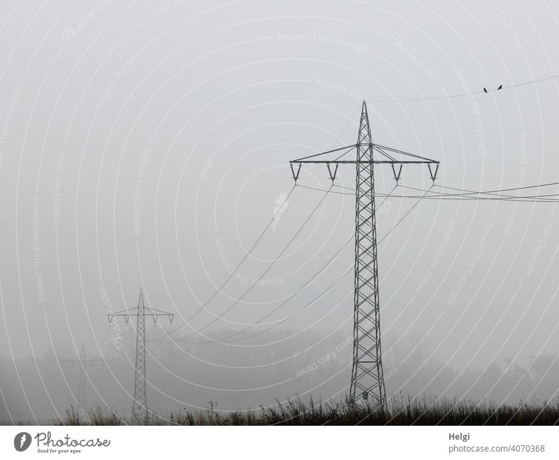 Power poles with power lines in the fog co2 Energy industry Electricity Electricity pylon Environment Exterior shot Technology Cable High voltage power line