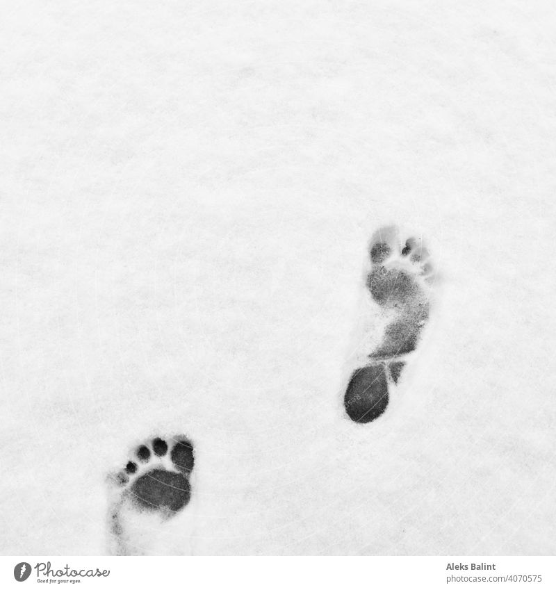 Barefoot prints in the snow Prints Snow Cold Winter Exterior shot Footprint Snow track White