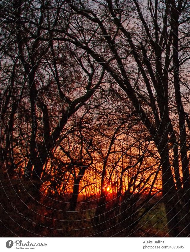 Sunrise through branches Branchage trees in the morning morning mood Nature Deserted Sunlight Exterior shot Colour photo Landscape Morning
