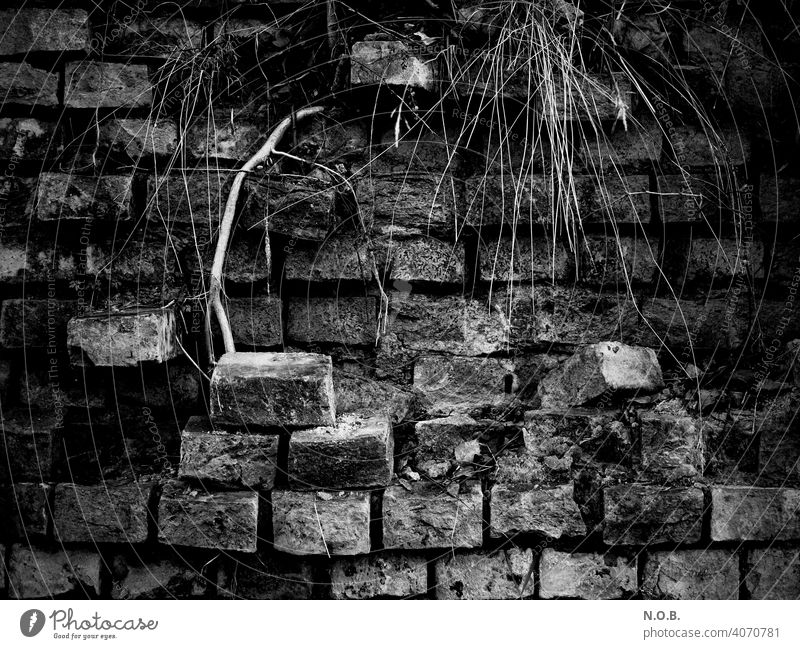 Dilapidated wall with scrub in black and white Wall (barrier) Wall (building) Exterior shot Deserted bricks Old Derelict Decline Transience Broken Destruction