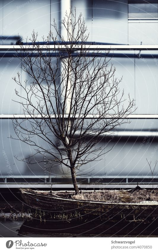 Tree growing in a boat in front of a facade Rowboat Facade Winter Loneliness wax Life Resistance Poetic inhospitably Deploy Chance possibility