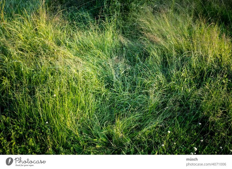 meadow Grass Meadow Nature Green trace stalks Kick Suspicion little flowers Clover question Agriculture Environment