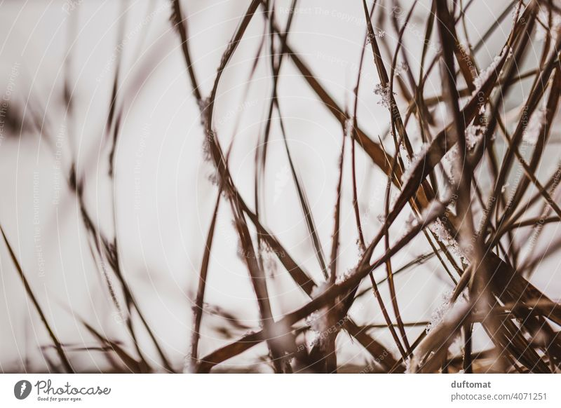 Macro shot of brown grass in winter Grass Winter Cold Snow Nature naturally Frost Ice Frozen Freeze Ice crystal Hoar frost Close-up Crystal structure