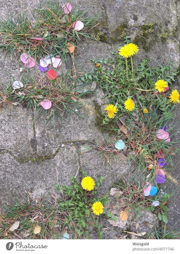 Confetti and flowers on stone floor Stone floor Street variegated Joy whimsical humorous Urban space plants Grass Summer Joie de vivre (Vitality) Colour photo