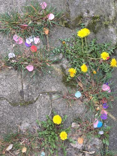 Confetti and flowers on stone floor Stone floor Street variegated Joy whimsical humorous Urban space plants Grass Summer Joie de vivre (Vitality) Colour photo