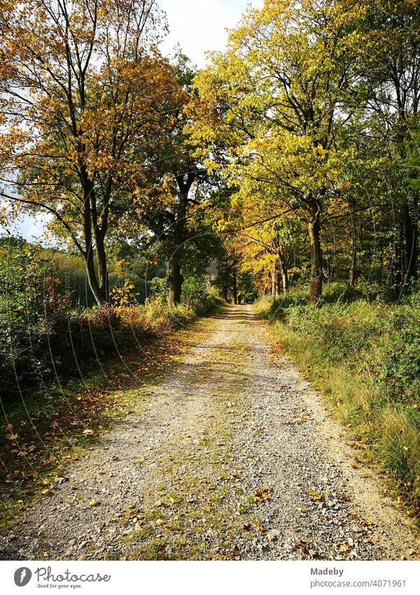 Field path for forestry in autumn sunshine in the Teutoburg Forest in Oerlinghausen near Bielefeld on the Hermannsweg in East Westphalia-Lippe Autumn Season