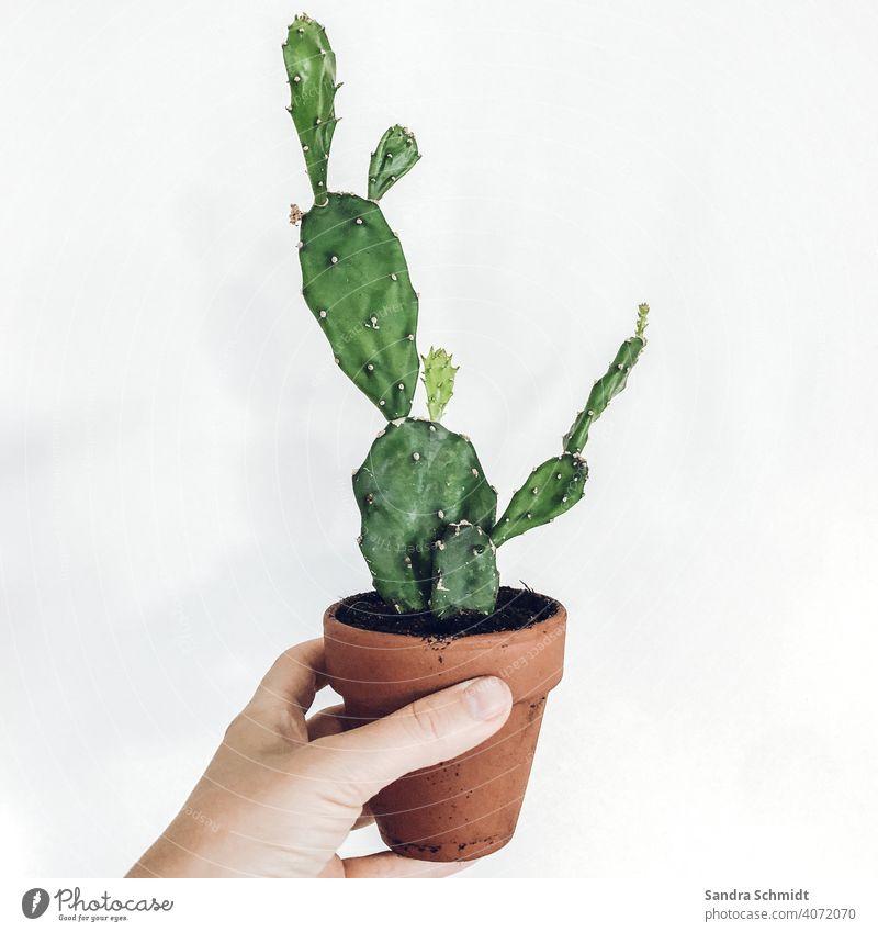 My no green cactus Cactus Opuntia Hand Clay pot cactus plant Foliage plant Green plants Houseplant Houseplants urban jungle plantlife fond of plants plantlove