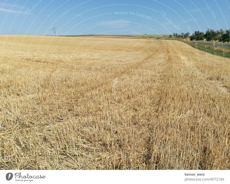 Empty cornfield in summer after harvest Cornfield Summer ardor Roadside country Agriculture Hot summer Drought Dry Dust lack of water no rain dry up Nature