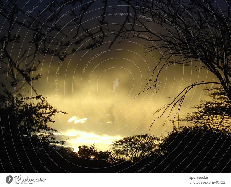 Wild Wilderness Dark Light Clouds Mystic Evening Shadow