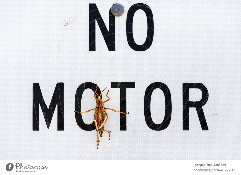 """Grasshopper sits on a sign """"no motor"""" grasshopper Insect Animal Locust Nature Close-up Colour photo Exterior shot Funny Snapshot Engines Deserted Green Orange"""