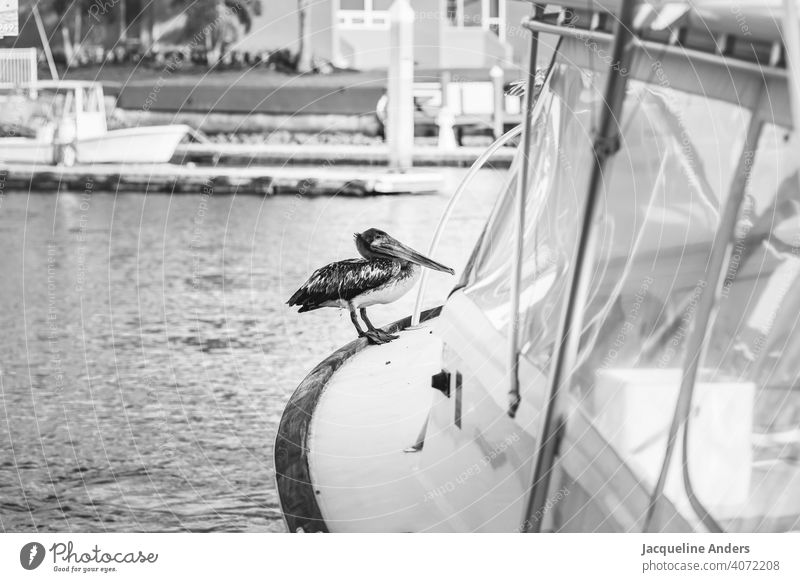 Pelican sitting on a boat in the water Water vacation Bird Ocean Nature Animal Exterior shot Beak Wild animal Deserted Animal portrait Day feathers pretty