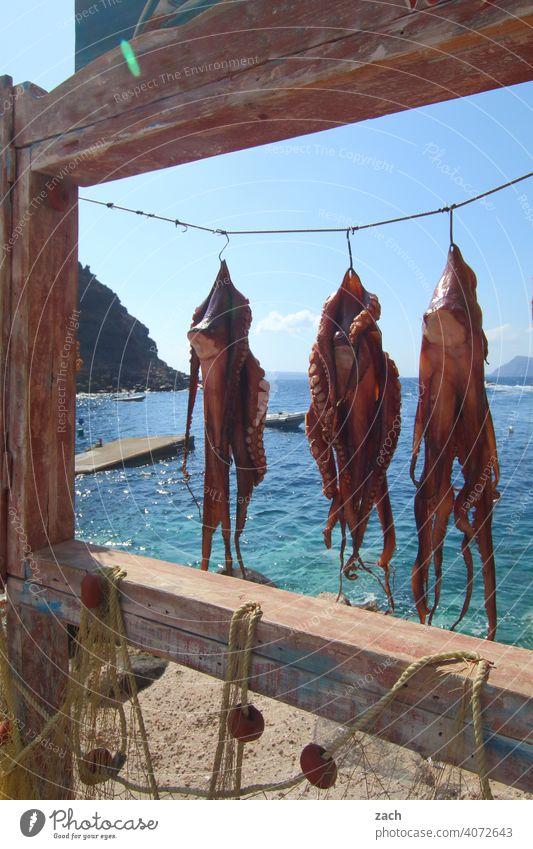 Menu, hanging octopus Squid Octopus Seafood Fish Food Nutrition Restaurant Gourmet Fresh Ocean Greece Cyclades Mediterranean sea the Aegean Island Water Blue