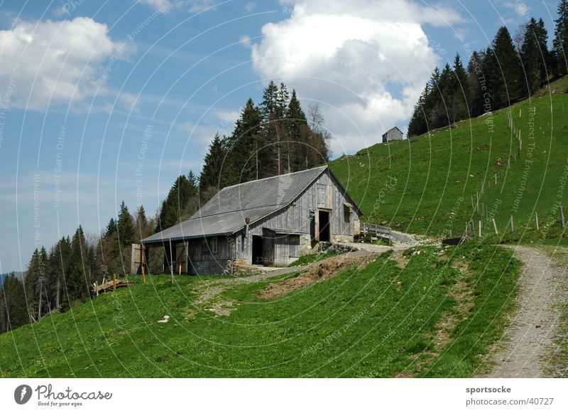 Alpine idyll Alpine pasture Summer's day Alpine hut Mountain Blue sky green meadow