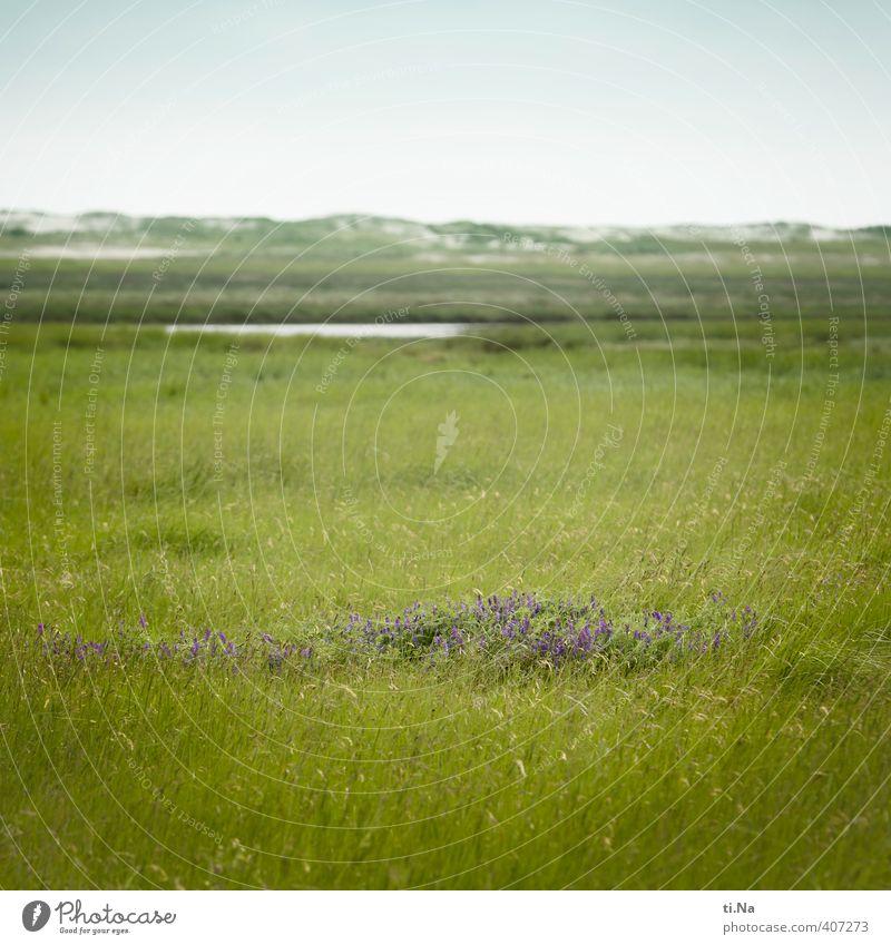 SPO | blooming island Summer Beautiful weather Flower Grass Coast North Sea Salt meadow Dune St. Peter-Ording Eyderstedt Schleswig-Holstein Deserted Blossoming