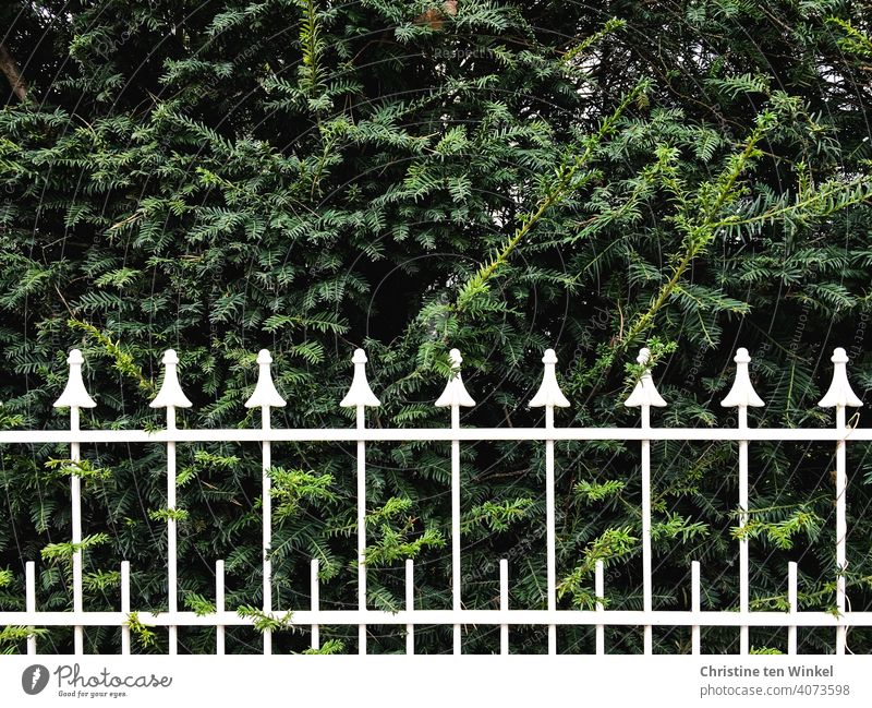 white painted wrought iron fence in front of green hedge Fence Fencing Fenced in White Wrought iron white lacquered ornamental Varnished pretty sharpen