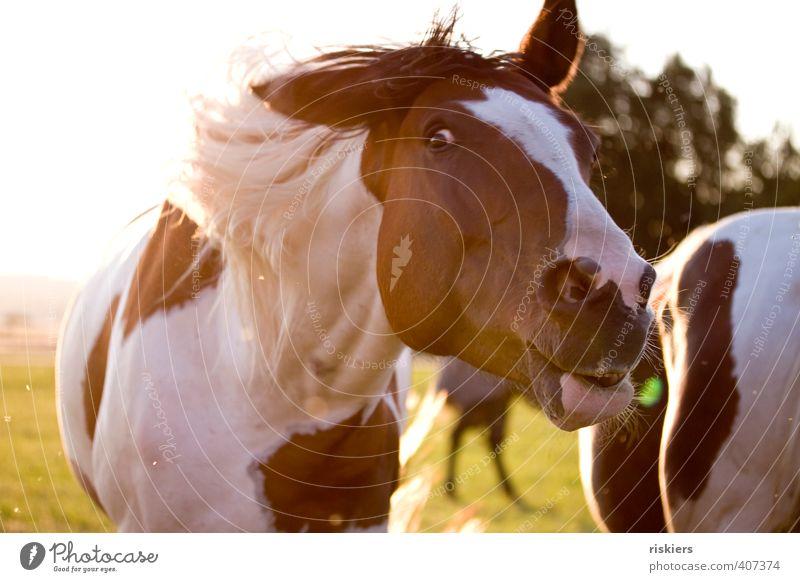 Animal Movement Funny Wild Authentic Free Observe Horse Pet Brash Shake