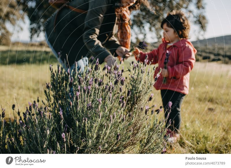 Mother and daughter picking spring flowers Spring Mother with child Daughter Together togetherness Lavender Caucasian Family & Relations motherhood Happiness