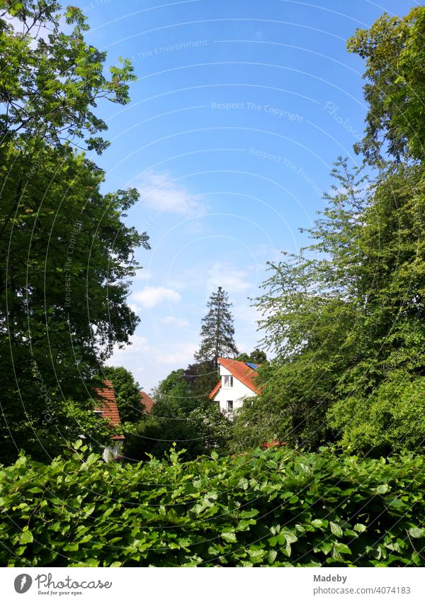 Modern houses behind green hedges, trees and bushes in summer sunshine in Oerlinghausen near Bielefeld on the Hermannsweg in the Teutoburg Forest in East Westphalia-Lippe