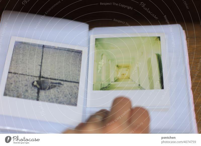 leafing through a photo album- polaroid photographs. dead bird lost place- transience Photo album Polaroid Photos To leaf (through a book) Hand Memory Analog
