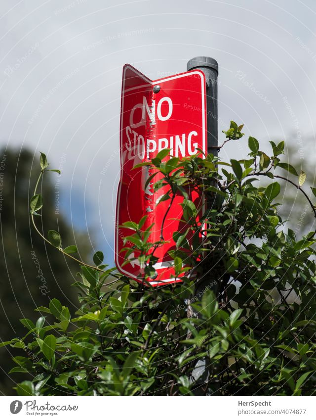 No stopping sign with climbing plant Road sign Signs and labeling Characters Road traffic Deserted Colour photo English Arrow Red signal red Stop Transport