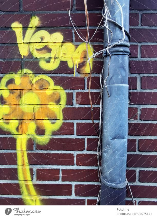 """The words """"Vegan"""" and a yellow flower were spray-painted on a brick wall next to a battered gutter. vegan Nutrition Vegan diet lettering Characters"""