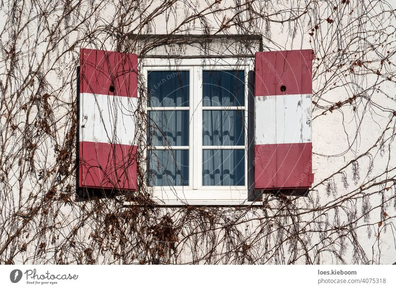Open traditional window shutters with red white Austrian flag at wall rambeled with leafless ivy austria open retro winter facade tree tirol restaurant frame