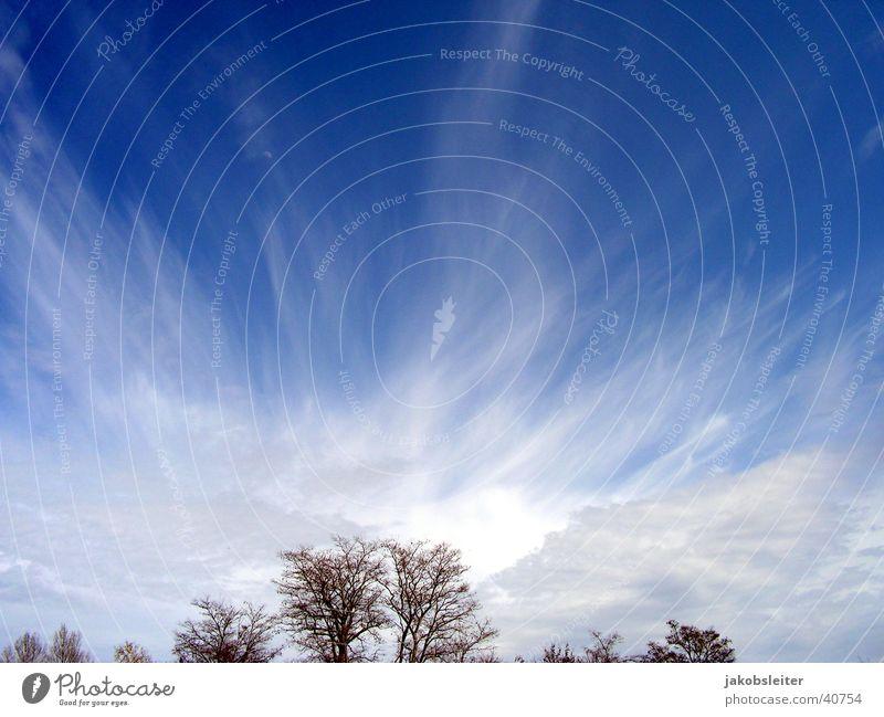 sky ride Tree Spring Clouds Sky Wind cloud atmosphere