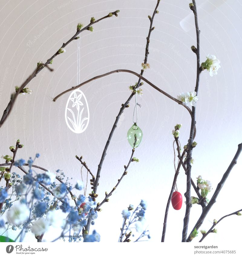 Cherry blossom branches with blue lurker herb and subtle Easter decoration Wall (building) White Easter bush easter jewellery Easter egg Colour photo