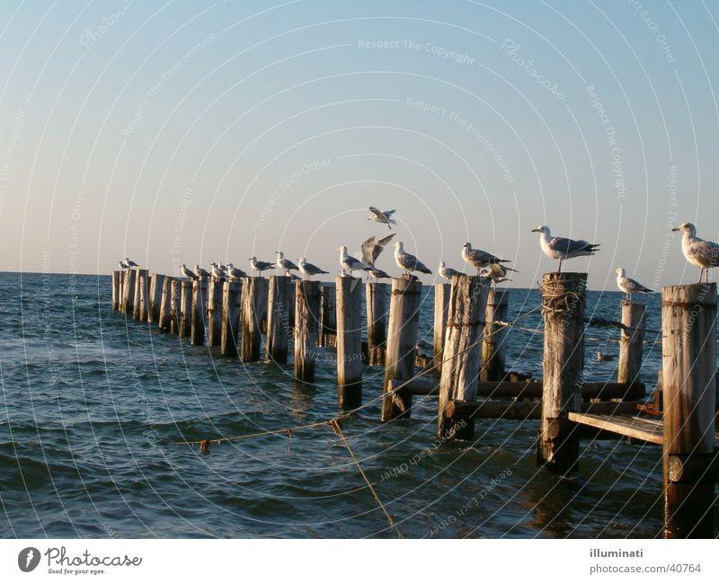 möwensteg Seagull Footbridge Ocean Bird Water Baltic Sea