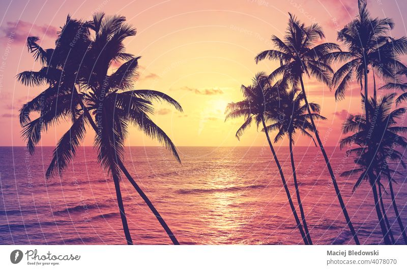 Coconut palm trees silhouettes at sunset, color toning applied. tropical beach coconut peaceful getaway water island paradise nature ocean travel sea summer