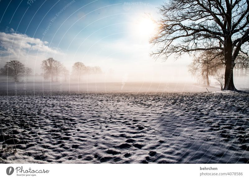 winter dream Sunlight Snowfall White Calm Environment Nature Meadow Frost Landscape Sky Winter Forest Field trees Weather silent winter landscape Idyll Cold