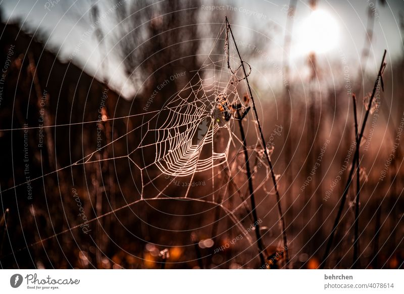 old wives' tale Leaf Bushes Plant Tree Contrast Sun Landscape Environment Colour photo Exterior shot Idyll tranquillity Spider Spider's web Nature Sunlight