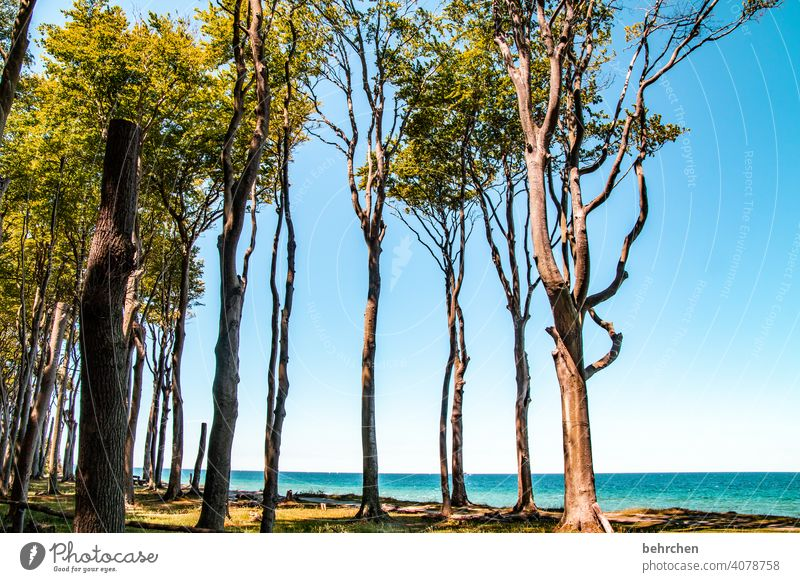 spaces   left trees, right trees and in between spaces Exterior shot Baltic Sea Ocean Beach Sky Nature Landscape Summer coast Vacation & Travel Relaxation