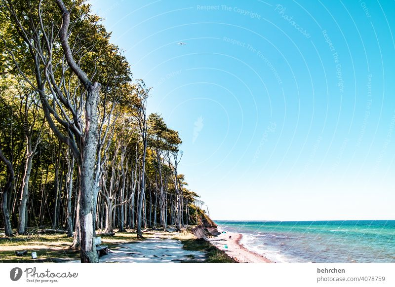 summer vacation 2021 Exterior shot Baltic Sea Ocean Beach Sky Nature Relaxation Vacation & Travel Ghost forest Mecklenburg-Western Pomerania coast Summer