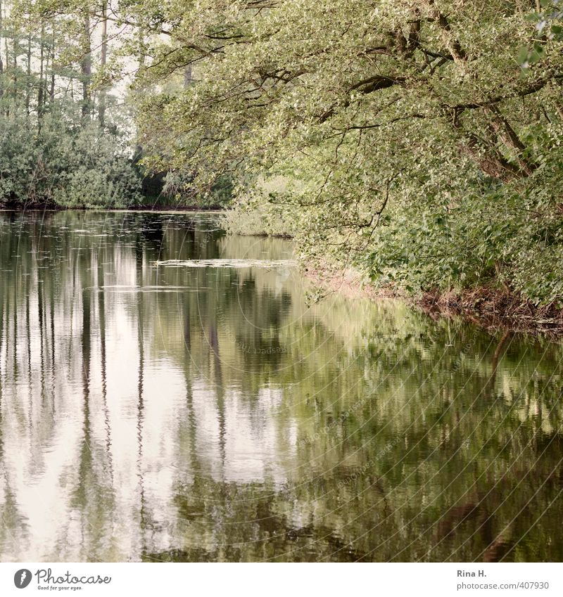 Swan Lake without Swan Nature Landscape Plant Spring Tree Pond Natural Green Idyll Calm Square Colour photo Exterior shot Deserted Reflection