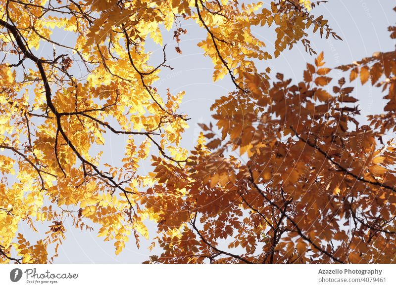 Beautiful yellow leaves in Autumn. abstract art autumn background beautiful beauty branch bright color dry environment fall fine art foliage forest garden