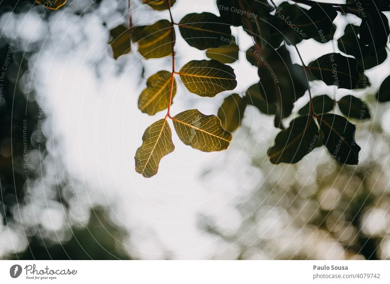 Green leaves against the sky Tree Leaf Nature Deserted Autumnal colours Brown Plant Yellow Autumn leaves Spring background Back-light Copy Space Environment