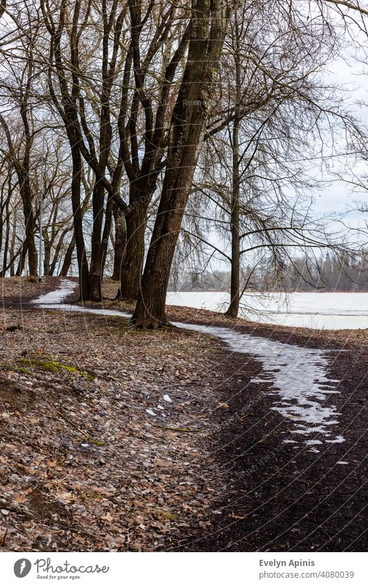 Vertical photo of frozen pathway in the park between trees near frozen river during early spring when all are still grey, but snow is smelted. ice-covered