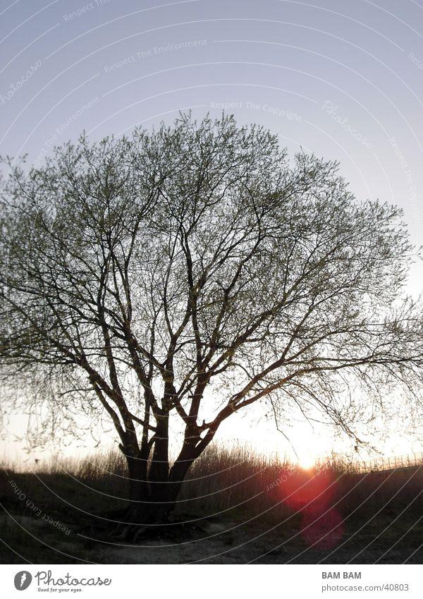 Tree Landscape Blue sky