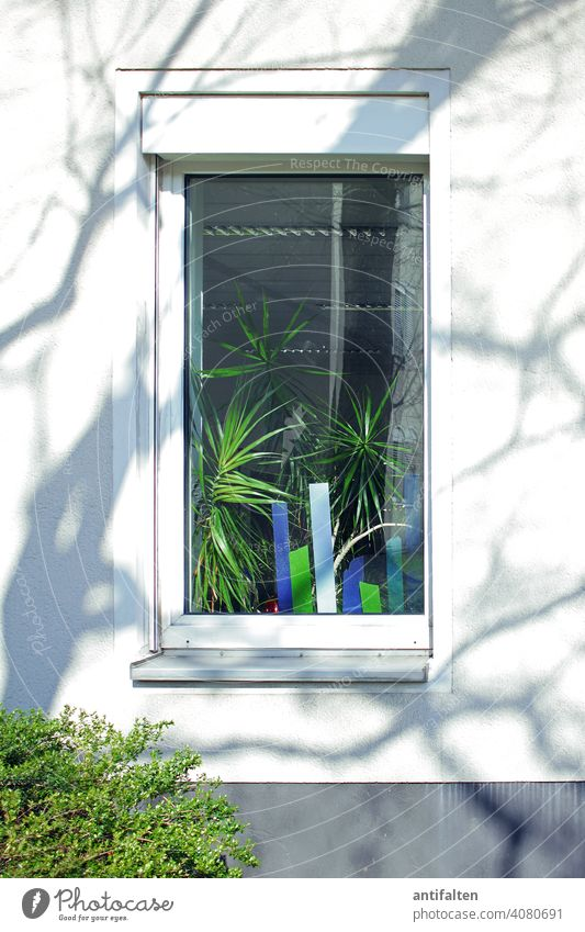 home-holidays at home stay at home plants Houseplant Window Window pane Decoration Green Foliage plant Colour photo Plant Pot plant Nature Flowerpot Day