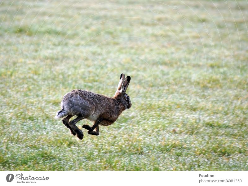 Hurry up, Easter Bunny! Run! rabbit Hare & Rabbit & Bunny Animal Ear Pelt Colour photo 1 Exterior shot Day Cute Deserted Animal face Shallow depth of field