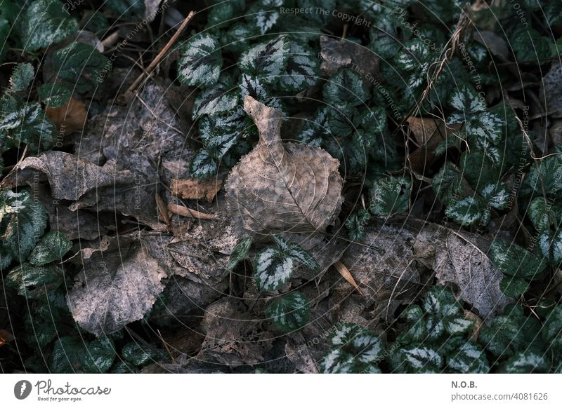 Rotting leaves Decompose rots Old Subdued colour Close-up Exterior shot Deserted Colour photo Decline Transience foliage Nature Change